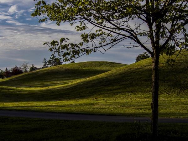 Evening Golf by Daisymaye