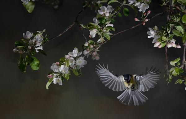 SPRINGFLIGHT by maratsuikka