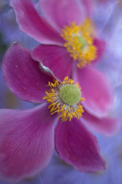 Subtle colours by EddieDaisy