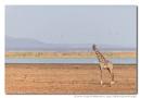 Manyara Dwellers by IngridVekemans