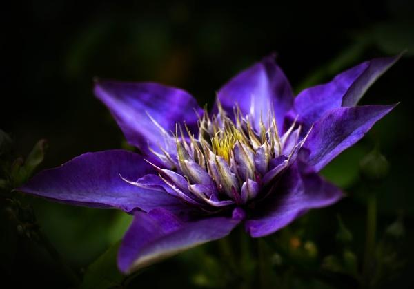 Purple Haze by Disee