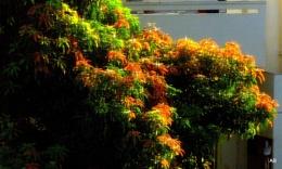 """"""" Tender Leaves """""""