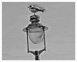 BIRDS  EYE-VIEW
