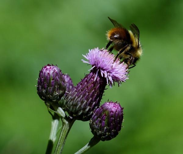 Beepurple by Houba