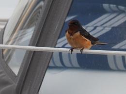 Sailing on the Chesapeake #4