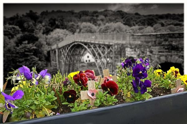 Pansies at Ironbridge by deavilin