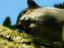 Squirrel eating acorn at Witley Common by ZoeKemp