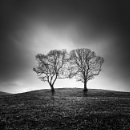 Two by Diggeo