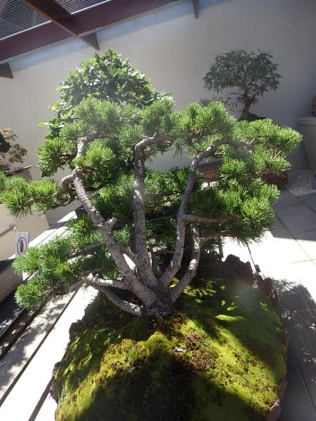 Bonsai 3 by artgaz1062