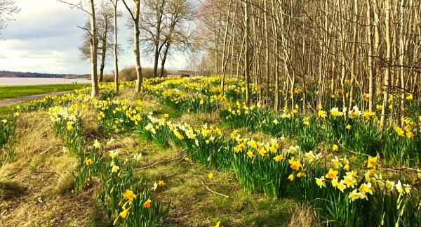 Spring Chorus. by Tooma