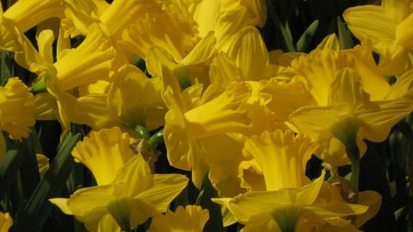 Lots of yellow by Ellenismyname65