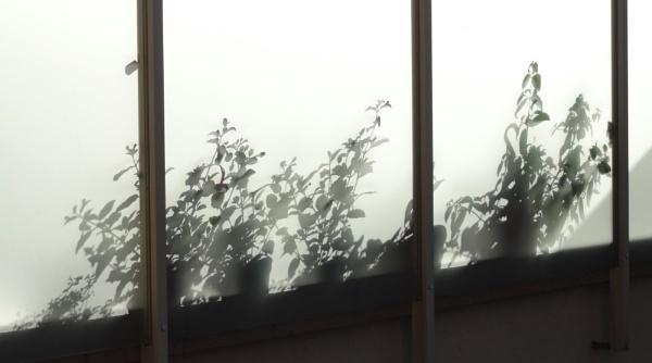 Beyond the shadow by SauliusR