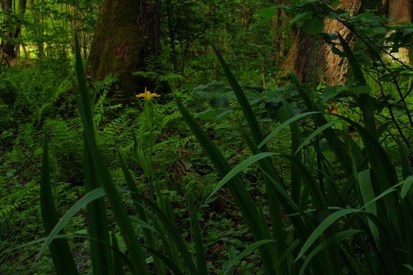 Forest Floor Flower by PentaxBro