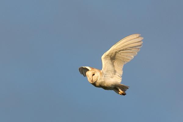 owl by STUARTHILL758