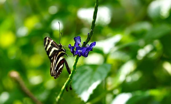 Zebra Butterfly and Flower by Steven_Tyrer