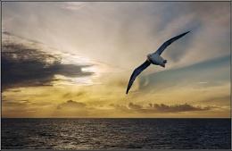 Atlantic Sky with Fulmar