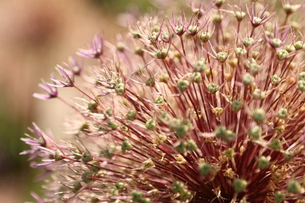 Flower firework by iNKFIEND