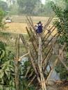 Bamboo Bridge by debu