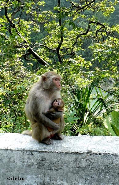 Mothers Love by debu