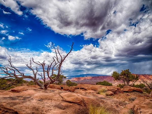Desert Storm by mlseawell