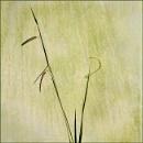 Grass on Grass by Irishkate