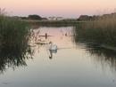 Swan Lake. by UrbaneMagick