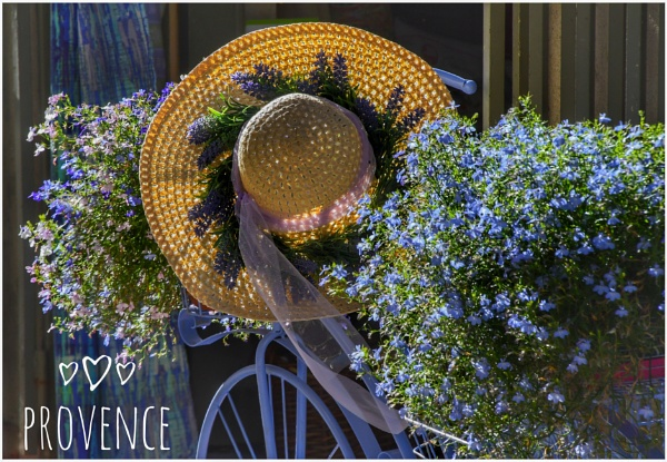 Provence by ColleenA