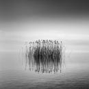 Lake Reflections 02 by Diggeo