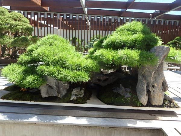 Bonsai 5 by artgaz1062
