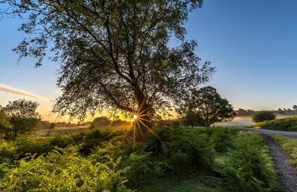 Summer Morning by NickLucas