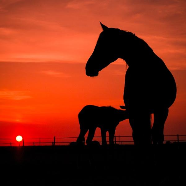 Brinda\'s Horses by Drummerdelight