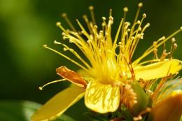 Closeup of a nice flower