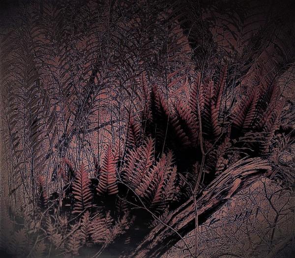 Tree Ferns Art by PentaxBro