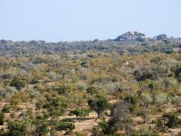 Landscape Kruger Park SA.