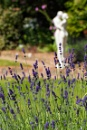 Love in the Lavender by Squirrel