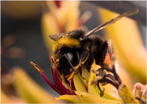 Pollen Harvest by badgerwil70