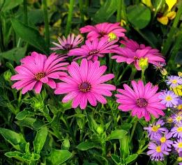 Everybody Loves Flowers