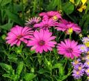 Everybody Loves Flowers by debu