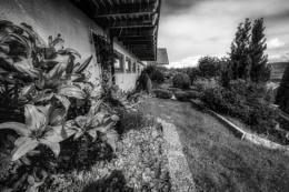Photo : Part of my front garden