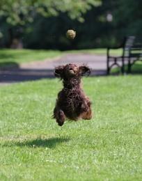Flying Sprooker