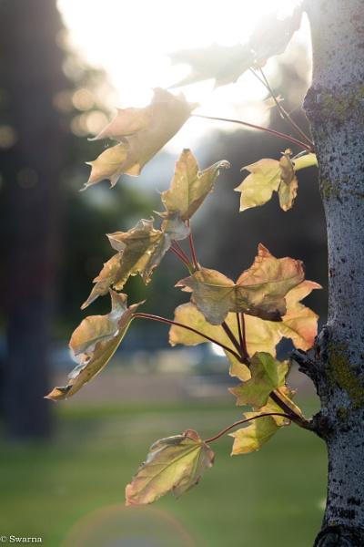Green Leaves of Summer by Swarnadip