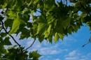 Greem Leaves by Swarnadip