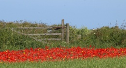 The Gate to the Poppies