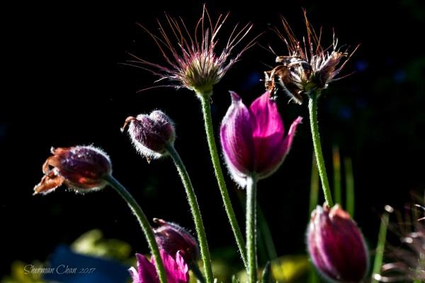 Dazzling Flowers by manicam