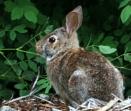 Rabbit  @  Royston  ships by tonyguitar