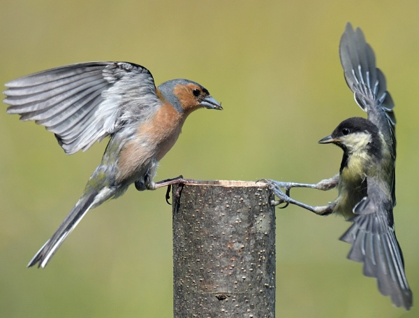 The Stand Off! by Holmewood