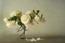 Wild Roses by flowerpower59
