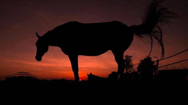 Dark Horse by Drummerdelight