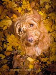 Bella In Autumn Leaves