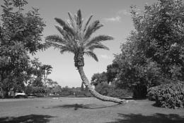 Photo : In the garden